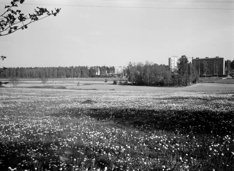 Kadonnutta Helsinkiä: Talin laukkaradasta enää muisto jäljellä